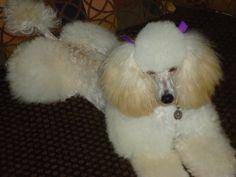 My precious Bella!
