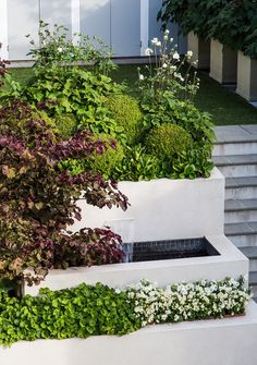 Layered Loveliness, a water feature, small growing tree Cercis Forest Pansy | Tinakori, HEDGE Garden Design & Nursery