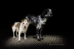 Sam Pawley photography #dogs #spaniel #terrier #photographer