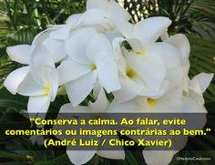 """""""Conserva a calma. Ao falar, evite comentários ou imagens contrárias ao bem."""" (André Luiz / Chico Xavier)"""