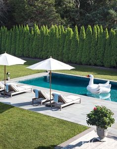 Having a pool sounds awesome especially if you are working with the best backyard pool landscaping ideas there is. How you design a proper backyard with a pool matters. Backyard Pool Designs, Swimming Pools Backyard, Swimming Pool Designs, Backyard Patio, Outdoor Pool, Backyard Landscaping, Backyard Ideas, Backyard Privacy, Privacy Trees
