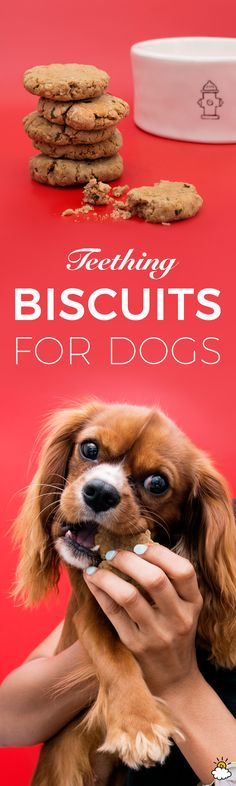 Teething Dogs Will Find Some Much-Needed Relief In These Yummy 6-Ingredient Biscuits