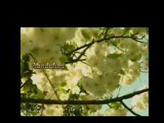 """Լ💕🌹💕✿•ԑ̮̑♦̮̑ɜ✿•""""When I Need You (Live)"""" por Julio Iglesias Լ💕🌹Ɣ💕"""