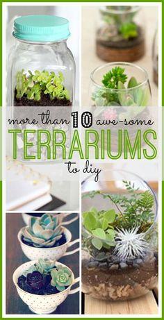 Love these cute and easy DIY terrariums! Garden Terrarium, Succulent Terrarium, Succulents Garden, Planting Flowers, Terrarium Ideas, Terrariums, Terrarium Scene, Indoor Garden, Indoor Plants