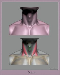 Drawing Anatomy Reference ArtStation - Anatomy Studies - Part Glauco Longhi - Head Anatomy, Human Anatomy Drawing, Anatomy Poses, Anatomy Study, Body Anatomy, Anatomy Art, Anatomy Reference, Art Reference, Elbow Anatomy