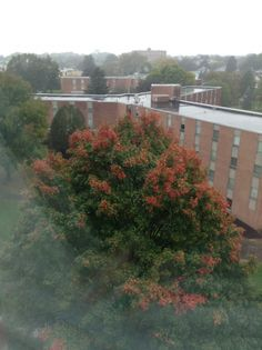 Changing Colors | Her Campus