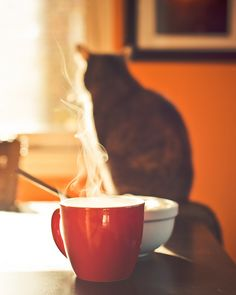 A kitty & coffee is love!  | #goodhousekeeping #createyourcomfy #12DaysOfMint