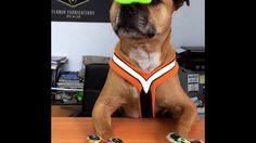 Fidget Spinner Dog