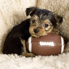 You Are the Puppy Bowl You are drawn to all things cute, and that certainly includes cuddly, fluffy puppies. You love to just kick back and enjoy life. You enjoy every moment and try not to get too worked up about anything. It's likely that you don't just get football, and that's okay. You definitely get puppies! Besides, the puppy bowl supports a good cause! You love the idea of promoting dog adoption while getting overloaded with cute.