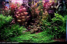 2003 AGA Aquascaping Contest - Entry #71