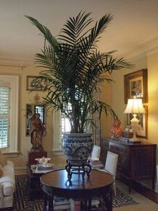 Nell Hill: Give a room in your home a bit of exotic beauty by putting a large palm in a killer cachepot and displaying it in a prominent spot.