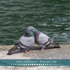 Co ma Międzynarodowy Dzień Gołębia do życia? Bird, Animals, Animales, Animaux, Birds, Animal Memes, Animal, Animais, Dieren