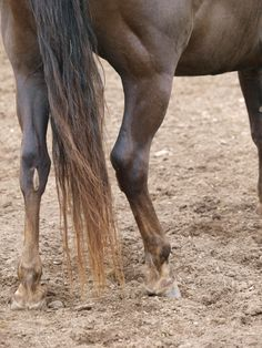Joint Disease in the Horse, 2e