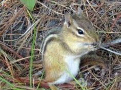 If chipmunks are making you crazy, consider these ways to protect your plants and property without actually killing the cute crittters. Maybe...