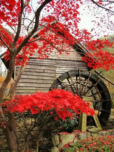 Gorgeous crimson maple leaves fill an autumn scene at an old grist mill