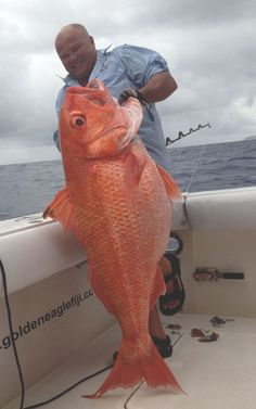Ruby Snapper caught onboard Golden Eagle while fishing Kadavu waters. Fishing In Fiji, Marlin Fishing, The Big E, Beneath The Surface, Golden Eagle, Black Leather Handbags, Travel And Leisure, Image House, Sea Diving