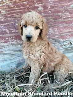 how to tell if a puppy has a fever