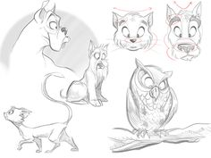 The Secrets in Drawing Animals by Carlos Cabral, via Behance