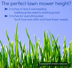 How to keep your lawn healthy by mowing at the right height. (I never would have thought about cutting short before overseeding! Fall Lawn Care, Lawn Care Tips, Landscaping Supplies, Yard Landscaping, Lawn Mower Maintenance, Lawn Turf, Growing Grass, Yard Care, Grass Seed