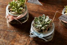 How to Make a Terrarium in a Ball® Jar   Fresh Preserving