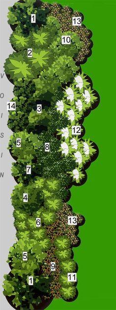 Taxus Forsythia suspensa ou Punica Granatum Eleagnus x ebbingei Prunus Cerasifera 'Pissardi' ou Hibiscus Syriacus 'Oiseau Bleu' Viburnum Opulus 'Flore Pleno' ou Lagerstroemia Indica Cytisus Scoparius Prunus Laurocerasus 'Rotundifolia' Ilex Crenata 'Helleri' ou Polygala Mirtifolia Rosier 'La Sevillana' ou Hebe Andersonii 'Autumn Flory' Choisya Ternata Millepertuis callycinum ou Bruyère Vagans Zantedeschia Aethiopica Hemerocallis (rose) Photinia 'Red Robin' ou Viburnum Lucidum