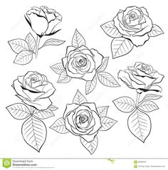 Rose Outline Tattoo, Flower Outline, Flower Art, Rose Outline Drawing, Rose Bud Tattoo, Rose Illustration, Floral Illustrations, Pencil Art Drawings, Drawing Sketches