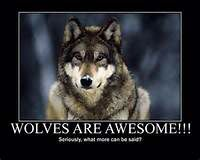 Wolves are awesome ....