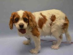 A1042813.JPG Edison , yup it is throw out the old spaniel week. If there were sharks floating around NYC , these dogs would be thrown to the sharks. Dog Shark Week !   SAFE