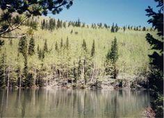 Pond above Elk Creek