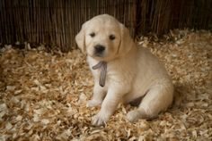 Sundog Drift…excellent blog…and PUPPIES!