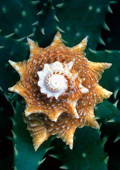 Seashell Photography by Warren Krupsaw