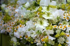 Sweet Peas, Nigella & Feverfew-are feverfew in season in April?  If so, would love to have lots of it, especially in the bulk flowers