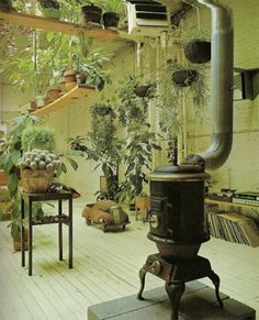 plants and woodstove