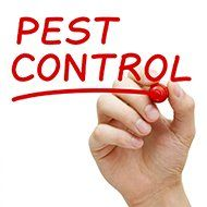 PFG Pest Control offers best treatment for Termite Control in Brassall
