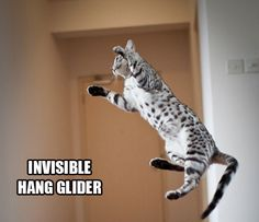 I <3 Invisible Cats