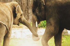 """elephant lovers"""