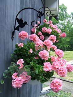 Hanging Flower Baskets / Love the Hummingbird Plant Hangers