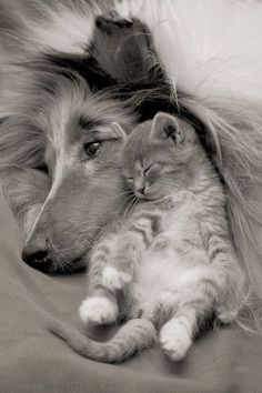 adorable dog and cat sleeping! aww!!!!!!!!!!!!!!!!!!!