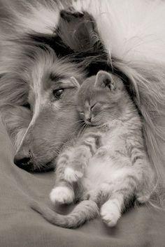 adorable animal pics!