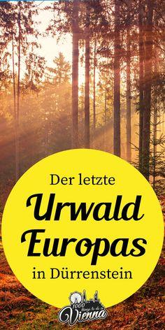 Spaziere in Dürrenstein durch den letzten Urwald Europas, perfekt als Ausflug mit der Familie im Herbst oder Frühling Vienna, Austria, Things To Do, Traveling, Wanderlust, Journey, Explore, Lifestyle, Places