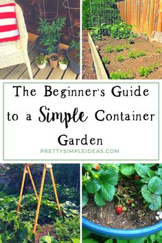 Rose Gardening For Beginners The Beginner's Guide to a Simple Container Garden - Everyone dreams of having a garden, but not everyone has the time or resources. To start simple container gardening, you just need a container and some dirt Container Gardening Vegetables, Vegetable Garden, Garden Container, Gardening For Beginners, Gardening Tips, Gardening Supplies, Pot Jardin, Starting Seeds Indoors, Bush Beans
