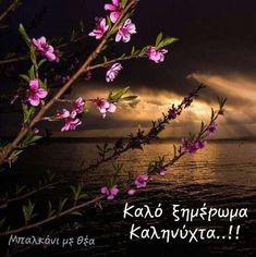 Good Morning Texts, Good Night, Nighty Night, Good Night Wishes