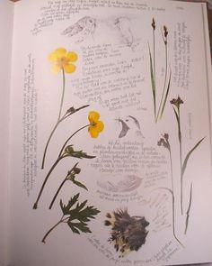 An Artist's Legacy: Marjolein Bastin's Nature Sketchbook.  I've always greatly admired her work.  #art #journal