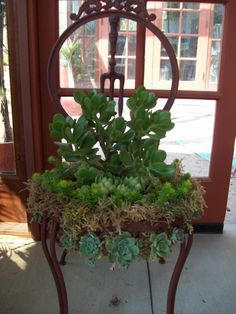 Chair turned into a planter for succulents.