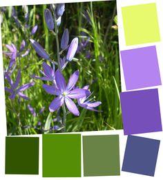 Color Palette… Spring Flowers, Camas