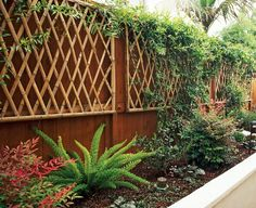 18 Wall Trellis Ideas for a Gorgeous Display of Flowering Vines Wall Trellis, Bamboo Trellis, Vine Trellis, Arbors Trellis, Trellis Ideas, Bamboo Wall, Bamboo Fence, Wooden Fence, Cheap Pergola