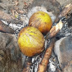 Discover why breadfruit is a treasured and beloved part of Caribbean food culture and definitely should be tried by those who travel to the region. Bermuda Travel, Jamaica Travel, Belize Travel, Cuba Travel, Caribbean Drinks, Caribbean Food, Caribbean Recipes, Breadfruit Recipes, Puerto Rican Cuisine