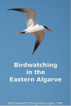 Birdwatching in the Eastern Algarve is an easy occupation - especially if you travel by train rather than hiring a car. Saltpans and estuaries here we come. Offshore Wind, Family Destinations, Holiday Resort, Natural Park, Busy City, European Destination, Portugal Travel, Ancient Ruins, Birdwatching
