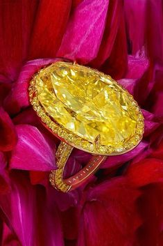 Double tap if you like💛💛 Tag ur baby also 👉 🔝🔝 💛💛💛💛💛💛💛💛💛💛 . from - Beyond compare. a striking carat natural fancy intense oval yellow diamond ring set with yellow diamonds. Only by the House of Moussaieff - Yellow Diamond Engagement Ring, Yellow Diamond Rings, Yellow Diamonds, Diamond Girl, Dainty Jewelry, Silver Jewelry, Fine Jewelry, Silver Jewellery Online, Mellow Yellow
