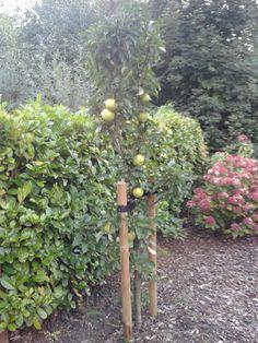 """""""Op een vruchtbare samenwerking"""" ....mooi om te zien dat een appelboom als #eindejaarsgeschenk, dit resultaat heeft en dat de ontvanger zijn eigen appeltaarten ervan maakt! #binding http://www.cadeauxperts.nl/a/mini-fruitboompje/"""